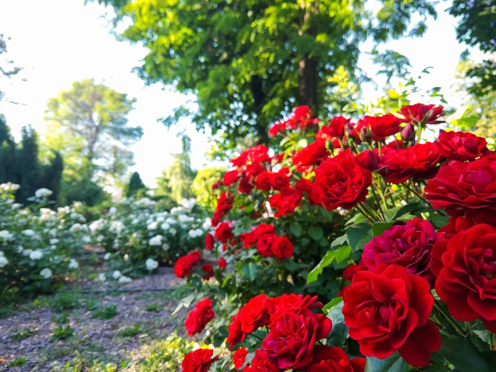 Slovenski dan vrtnic